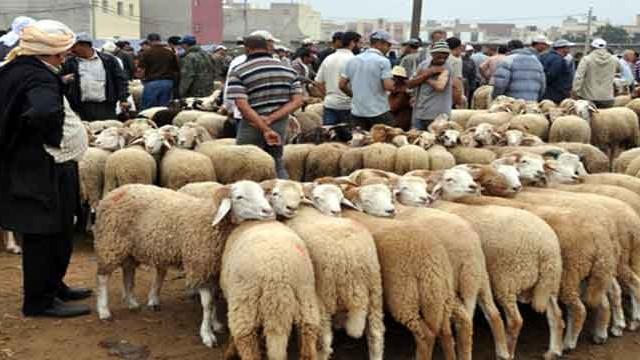 ديوان تربية الماشية :هذه أسعار الأضاحي المنتظرة