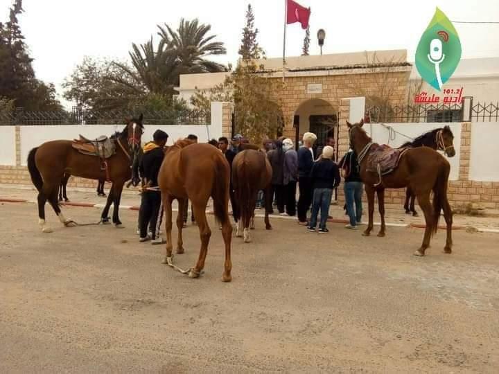 منزل الحبيب: مربو الخيول يطالبون بتوفير السداري